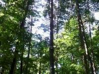 arbre-06.jpg