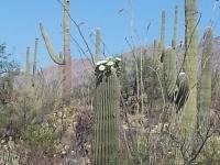 Arizona15