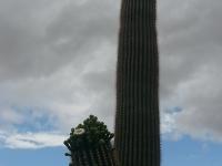 Arizona12