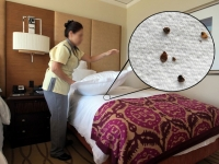bedbugs-2.jpg