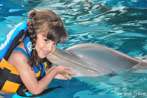 Bagno con i delfini perché non farlo iviaggidiliz