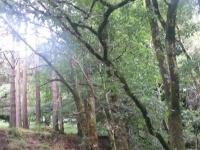 Glendalough6s