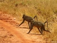 Kenya13.jpg