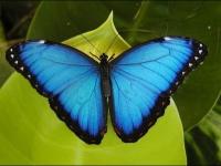 papillon-02