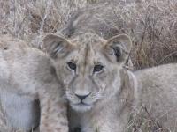 safari7.jpg