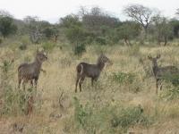 safari15.jpg