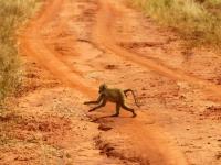 safari16.jpg