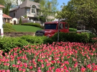 tulip8.JPG