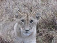 safari11.jpg