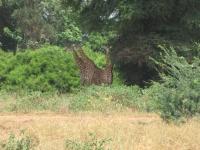 safari12.jpg